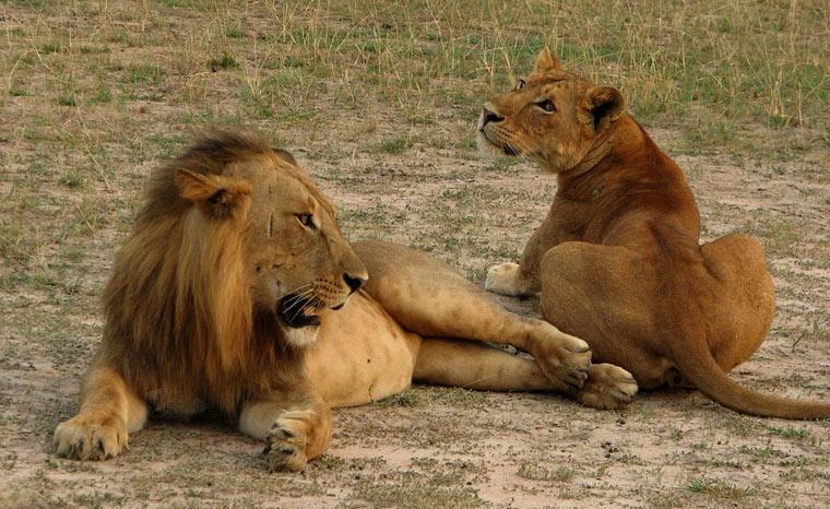 Murchison Falls National Park - Uganda