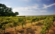 Winnice w Weronie