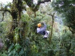Canopy tour, Moteverde, Kostaryka