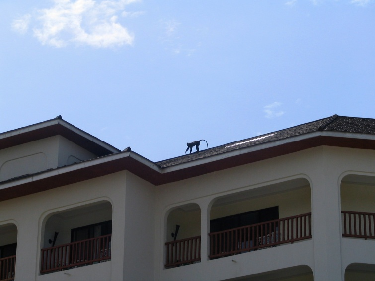 Małpki są wszędzie :) - Mombasa - Kenia