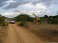 Bliskość zwierząt - Mombasa - Kenia