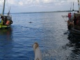 Delfin - Mombasa - Kenia