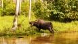 - wycieczka objazdowa - Tajlandia