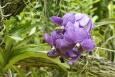 Ogród botaniczny Sin, orchidea - Park orchidei - Singapur - Singapur