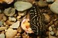 Motyl - Bukit Lawang - Indonezja