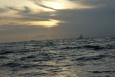 Wyspa Phi  Phi - Tajlandia