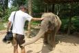 koh Tao, labi, Śladami Marzeń, słoń, tajlandia - Face to face ! - KOH LANTA - Tajlandia