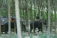 blog podróżniczy, koh Tao, Śladami Marzeń, słoń, tajlandia, Trekking - mordowania słoni - KOH LANTA - Tajlandia