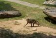 Koh Lanta Nationalo Park - KOH LANTA - Tajlandia
