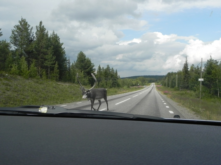 zejdź mi z drogi człowieku - wycieczka objazdowa - Norwegia