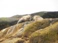 Anda, Arctic Center, Lofoty, wielorybnicze safari - Foczki na wyspie Anda - wycieczka objazdowa - Norwegia