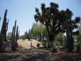 Ciudad Mexico, roślinność - Ciudad Mexico - Ciudad Mexico - Meksyk