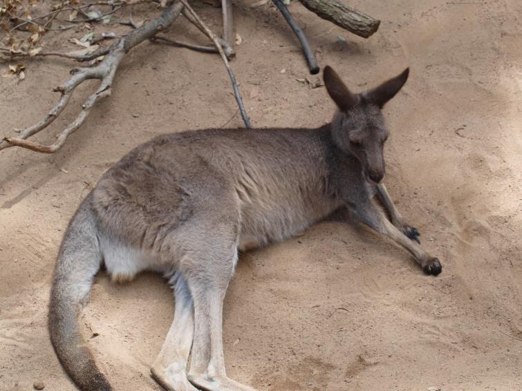 Zoo w Sydney, Australia - New South Wales - Australia