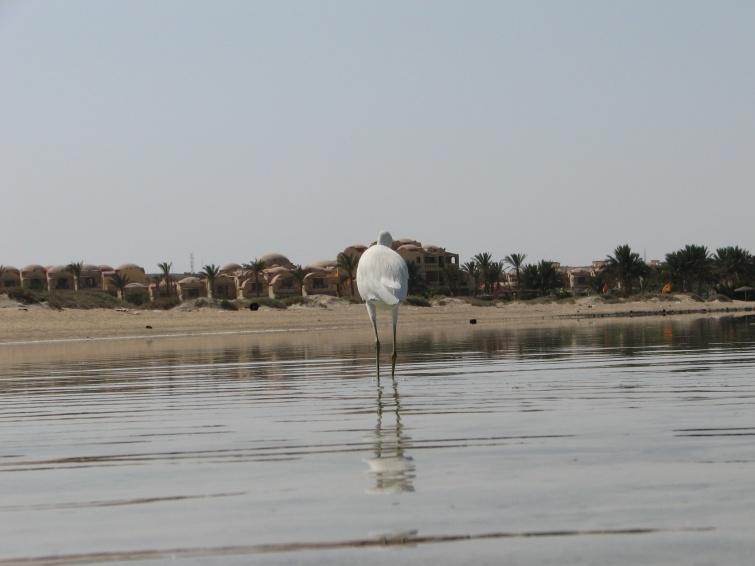Marsa el Alam - Egipt