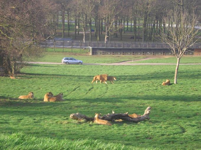 Woburn Safari Park - Anglia