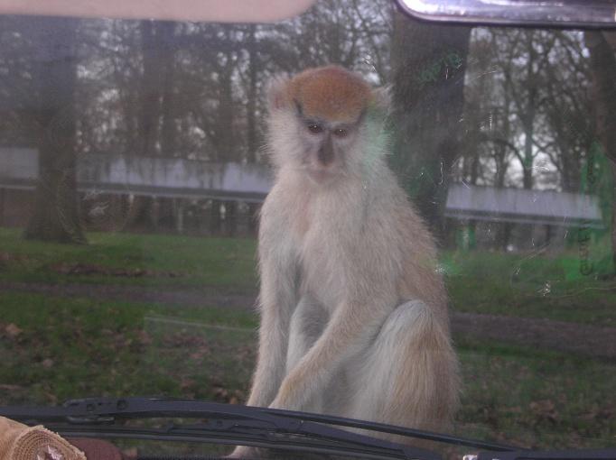 Woburn Safari Park - Anglia – relacje z podróży